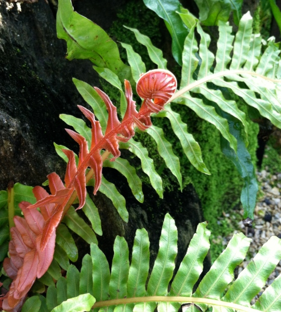 unfurl little fern